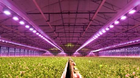 Bitki Lambası - LED Bitki Yetiştirme Lambaları